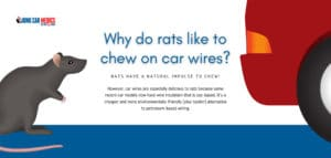 Rats like to chew on soy-based car wires.